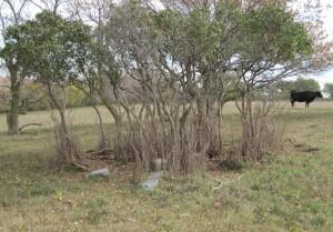 Brush marking grave sites